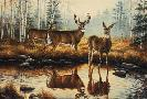 Rosemary Millette Autumn Reflections - Whitetail Deer