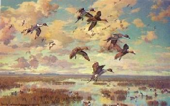 Harry Curieux Adamson Avian Elite Pintails Artist