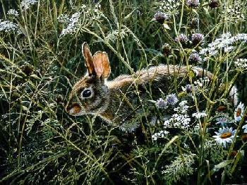John Seerey-Lester Awakening Meadow Cottontail Artist
