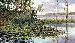 Ron Van Gilder Backwater Bull - Moose