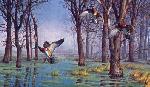 David Maass Backwater Hideaway Wood Ducks
