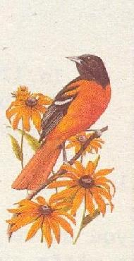 Arthur Singer Baltmore Oriole and Black Eyed Susan