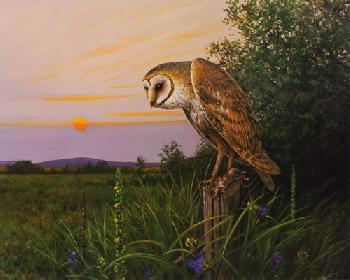 Owen Gromme Barn Owl