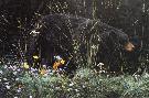Stephen Lyman Bear and Blossoms
