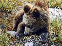 Carl Brenders Bearly Awake