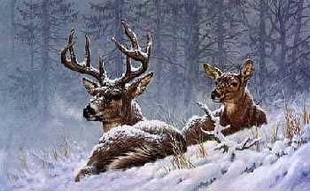 Larry Fanning Bedded Down Whitetail Deer Artist
