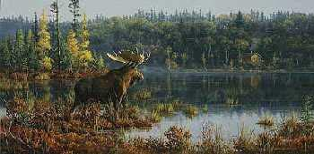 Jim Hautman Black Bay - Moose