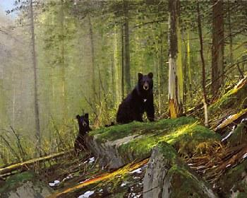 Michael Coleman Black Bears on the Sun River Giclee on Canvas