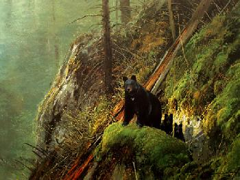 Michael Coleman Black Bears - Tower Creek