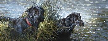 Bonnie Marris Black Magic Giclee on Canvas