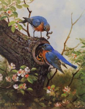Owen Gromme Bluebird Family