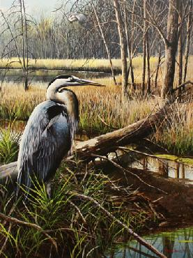 Kevin Daniel Blue Herrons on Shelley Island Artist