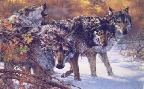 Lee Kromschroeder Body Language - Timber Wolves