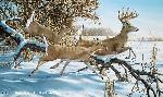 Ron Van Gilder Breaking Cover - Whitetail Deer
