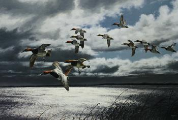 David Maass Breaking Skies - Canvasbacks Artist