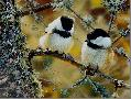 Carl Brenders In the Black Black - Capped Chickadees