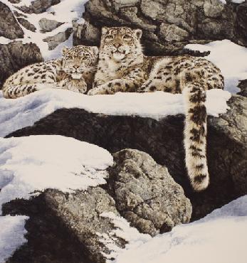 Chris Calle Brief Encounter - Snow Leopards