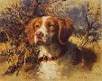 Robert Abbett Brittany Spaniel Head - Facing Left