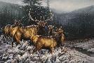Rosemary Millette Broken Silence - Elk