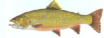 Flick Ford Brook Trout Signed Open Edition Giclee on Paper