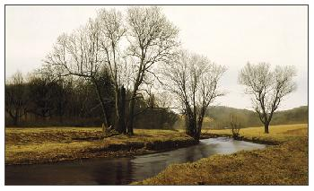 Peter Sculthorpe Buck and Doe Run Giclee on Paper
