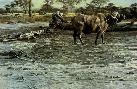 Robert Bateman Buffalo at Amboseli