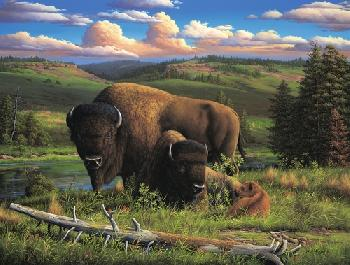 Ronnie Hedge Buffalo Nation Canvas
