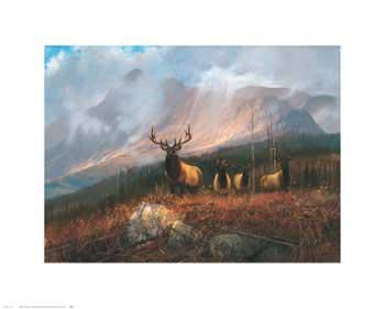 Michael Coleman Bookcliffs Elk II