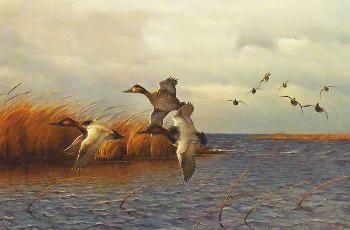 Owen Gromme Canvasbacks