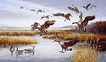 Maynard Reece Careful Landing - Canada Geese