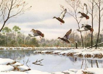 William Redd Taylor Cautious Descent - Black Ducks Artist