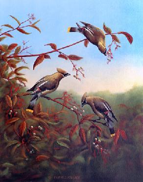 Terrill Knaack Cedar Waxwings