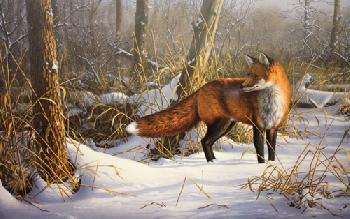 Jim Hautman Chance Encounter - Red Fox