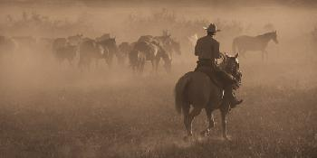 Robert Dawson Changing Pastures Open Edition on Paper