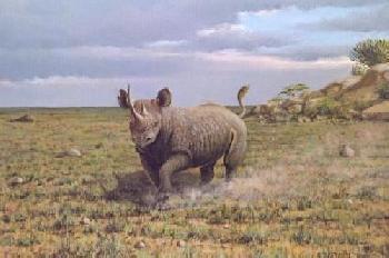 Owen Gromme Charging Rhino - Serengeti