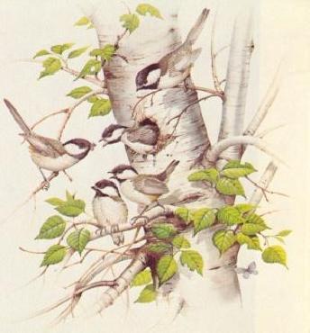 James McClelland Chickadee Family Artist