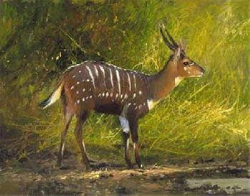 Michael Coleman Chobe Bushbuck, Okavango Artist