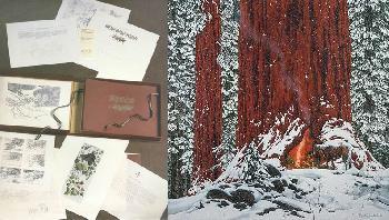 Bev Doolittle Christmas Day WSS From Where Silence Speaks Set 1986