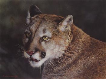 Carl Brenders Close Up Cougar