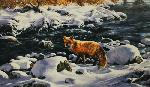 Rosemary Millette Cold Creek - Red Fox