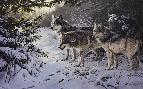 Persis Clayton Weirs Cold Trail - Wolves