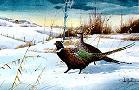 Les Kouba Cross Country Pheasants