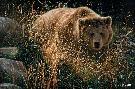 Collin Bogle Crossing Paths - Brown Bear
