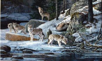 Scott Zoellick Cry Wolf Artist