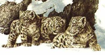 Chris Calle Curious Cubs