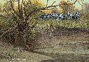Ron Van Gilder Cutbank Zebras