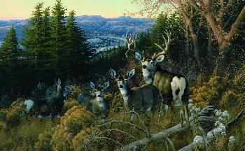 Michael Sieve Dakota Prince - Mule Deer Artist
