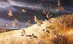 Maynard Reece Dark Sky - Bobwhites