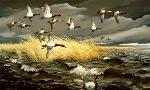 Maynard Reece Dark Sky - Canvasbacks