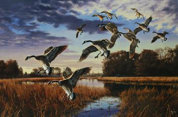 David Maass Daybreak Descent - Canada Geese